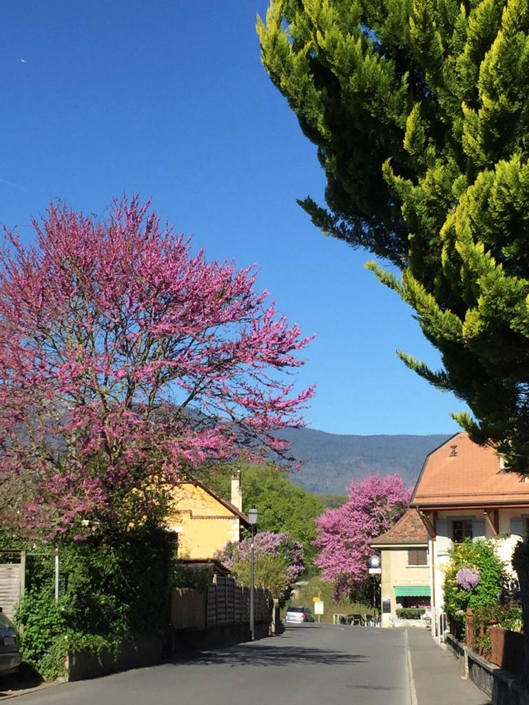 Chancy村の春